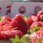 肌荒れの原因は栄養不足?敏感肌改善のための食事~ビタミン・油編
